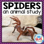 Engage your class in an exciting hands-on experience learning all about spiders! Perfect for science in Preschool, Pre-K, Kindergarten, First Grade, and Second Grade classrooms and packed full of inviting science activities.  Students will learn about the difference between spiders and insects, parts of a spider, and a spider's life cycle. When students are done they can complete a spider research project. This pack is great for homeschoolers, kids craft activities, and to add to your unit studies!
