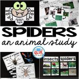 Engage your class in an exciting hands-on experience learning all about spiders! This Spiders: An Animal Study is perfect for science in Preschool, Pre-K, Kindergarten, First Grade, and Second Grade classrooms and packed full of inviting science activities.  Students will learn about the difference between spiders and insects, parts of a spider, a spider's life cycle, and many more fun facts. When students are done they can complete a spider research project. This pack is great for homeschoolers, kids craft activities, and to add to your unit studies!