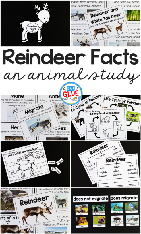 Reindeer Facts : An Animal Study