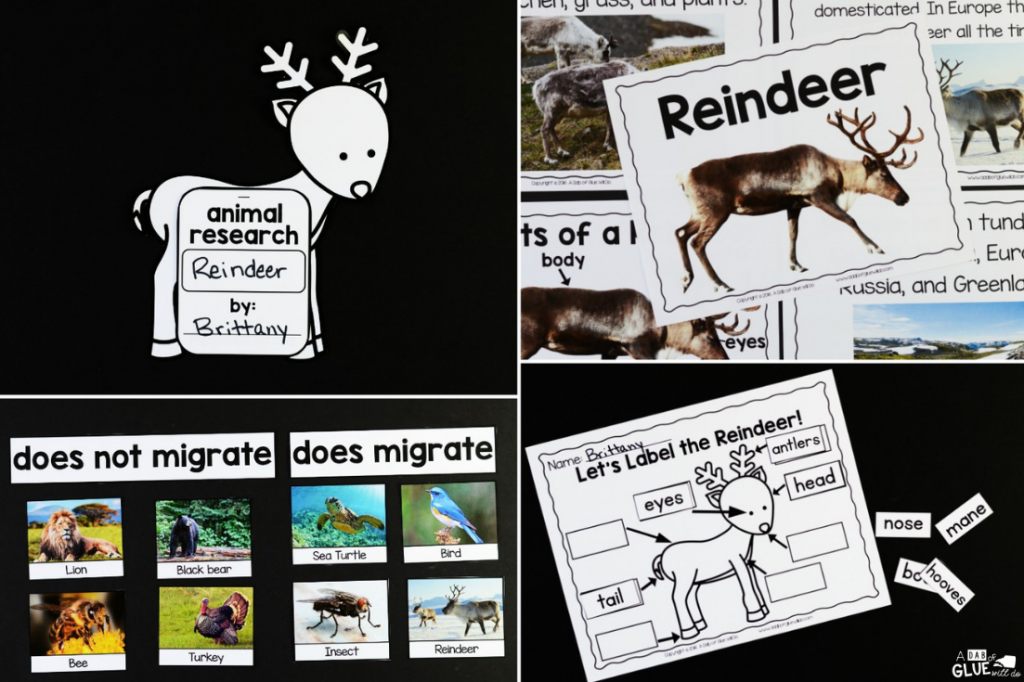 Connect reindeer with science and the study of animals, with this Reindeer Facts: An Animal Study. Students love learning and researching about animals.