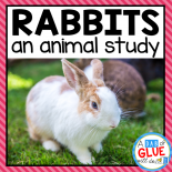 Engage your class in an exciting hands-on experience learning all about rabbits! This Rabbit: An Animal Study is perfect for science in Preschool, Pre-K, Kindergarten, First Grade, and Second Grade classrooms and packed full of inviting science activities.  Students will learn about the difference between rabbit and a hare, omnivores, herbivores, and carnivores, parts of a rabbit, and a rabbit can, have, are craftivity. When students are done they can complete a rabbit research project. This pack is great for homeschoolers, kids craft activities, and to add to your nonfiction science unit studies!