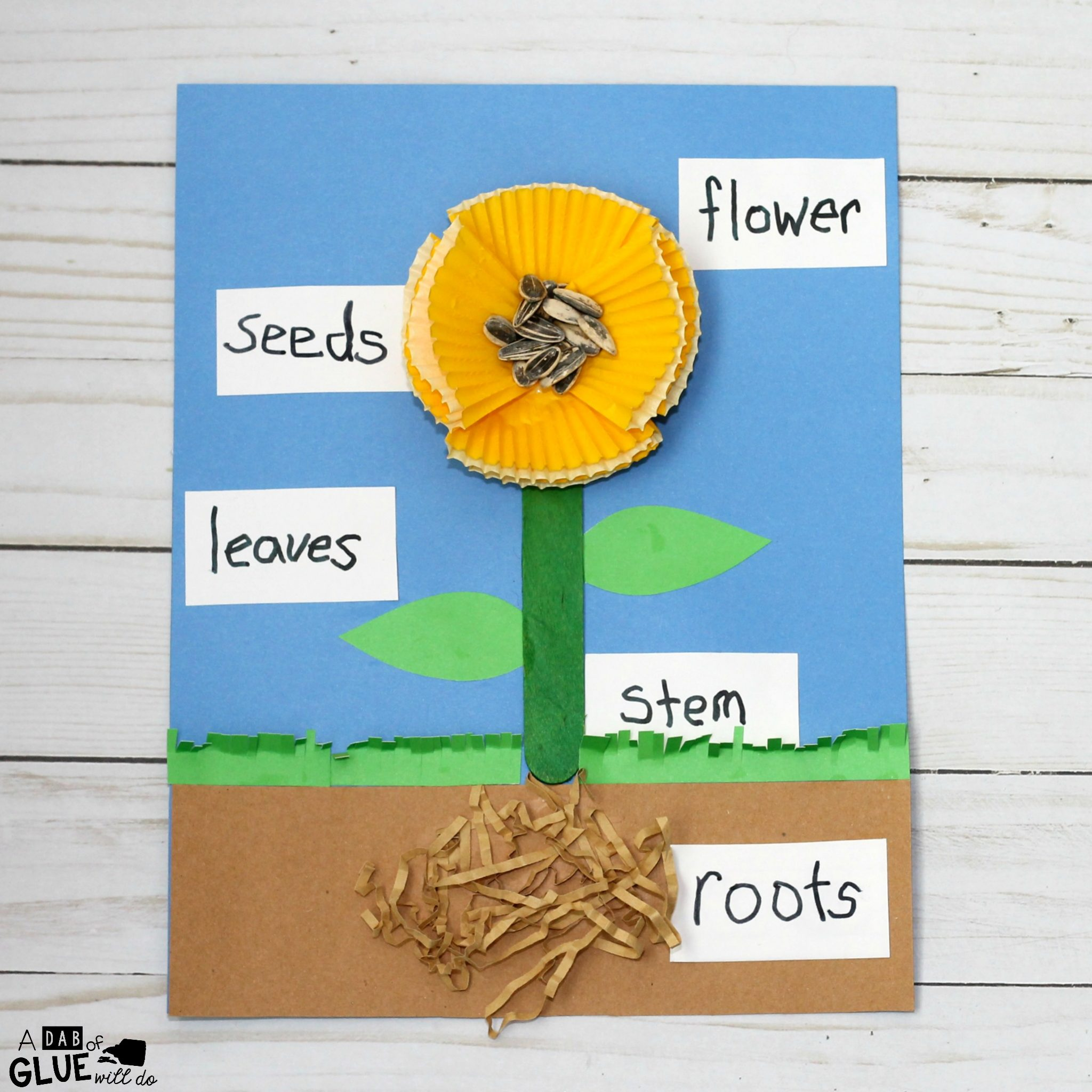 Image Result For Life Cycle Of Plants For Kids