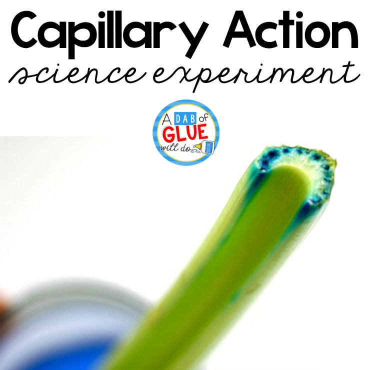 image regarding Celery Experiment Printable Worksheet titled Celery Science Experiment -