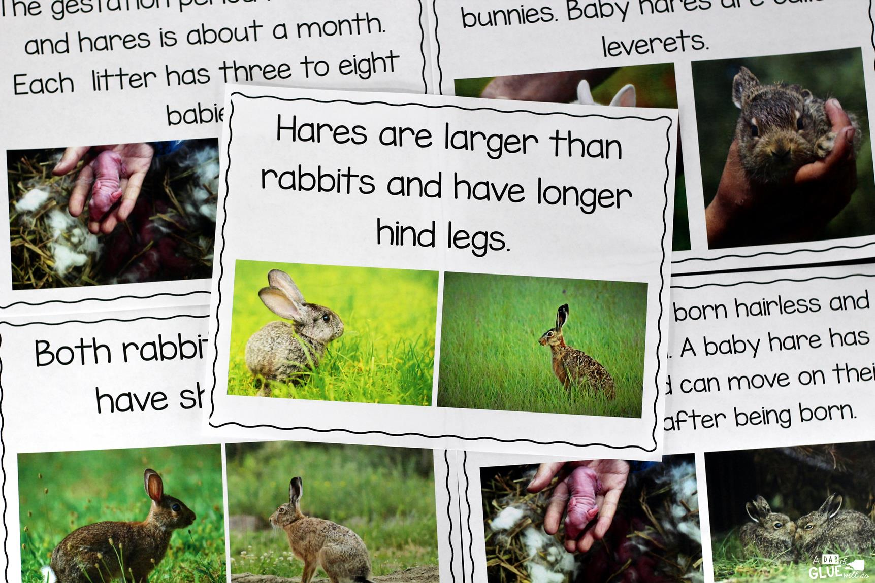 Rabbit Facts : An Animal Study -