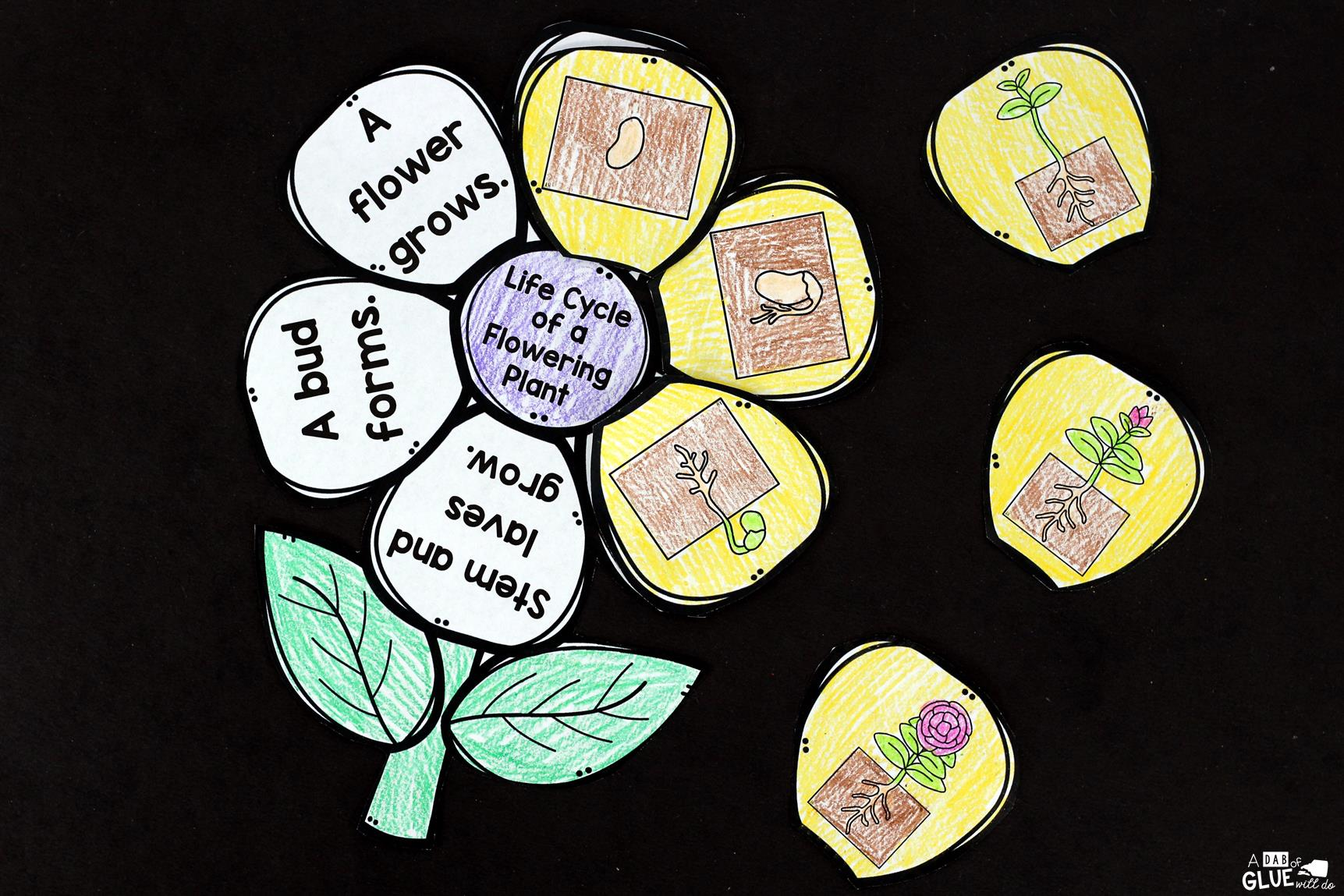 Flowering Plant Life Cycle Craftivity - A Dab of Glue Will Do