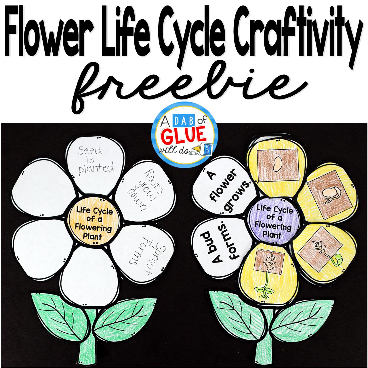 File name: Flowering Plant Life Cycle Craftivity is the perfect addition to your science lesson plans this spring. This free printable is perfect for preschool, kindergarten, first grade, and second grade students.