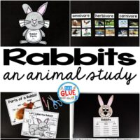 Engage your class in an exciting hands-on experience learning all about rabbits! This Rabbit Facts: An Animal Study is perfect for science in Preschool, Pre-K, Kindergarten, First Grade, and Second Grade classrooms and packed full of inviting science activities.  Students will learn about the difference between rabbit and a hare, omnivores, herbivores, and carnivores, parts of a rabbit, and a rabbit can, have, are craftivity. When students are done they can complete a rabbit research project. This pack is great for homeschoolers, kids craft activities, and to add to your nonfiction science unit studies!