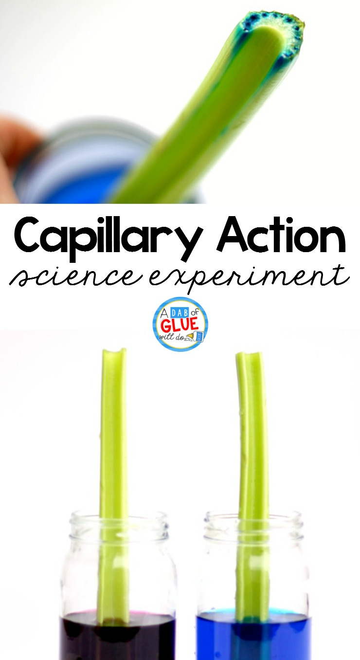 picture about Celery Experiment Printable Worksheet identified as Celery Science Experiment -