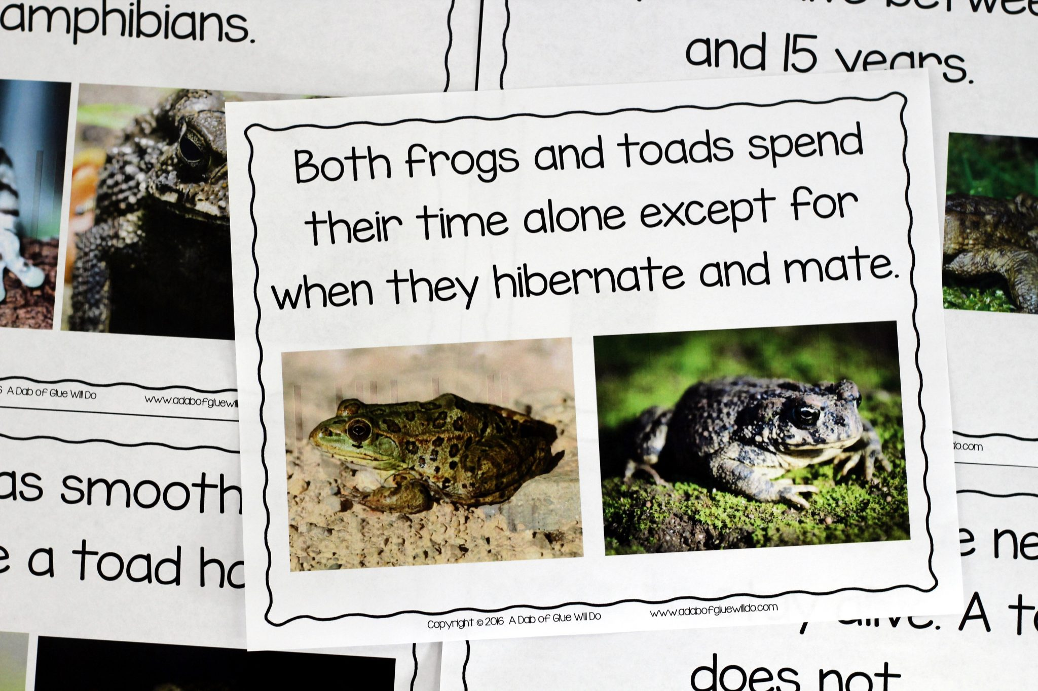Frogs an animal study a dab of glue will do engage your class in an exciting hands on experience learning all about frogs this frog and toad venn diagram pooptronica Gallery