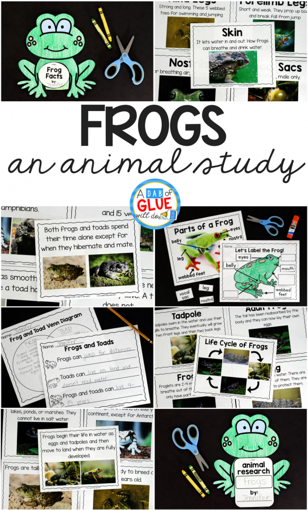 Engage your class in an exciting hands-on experience learning all about frogs! This Frog Animal Study is perfect for science in Preschool, Pre-K, Kindergarten, First Grade, and Second Grade classrooms and packed full of inviting science activities. Students will learn about the difference between frogs and toads, animals that live in the freshwater and animals that live in saltwater, parts of a frog, and a frog's life cycle. When students are done they can complete a frog research project. This pack is great for homeschoolers, kids craft activities, and to add to your unit studies!