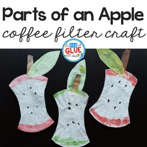 Parts of an Apple Coffee Filter Craft