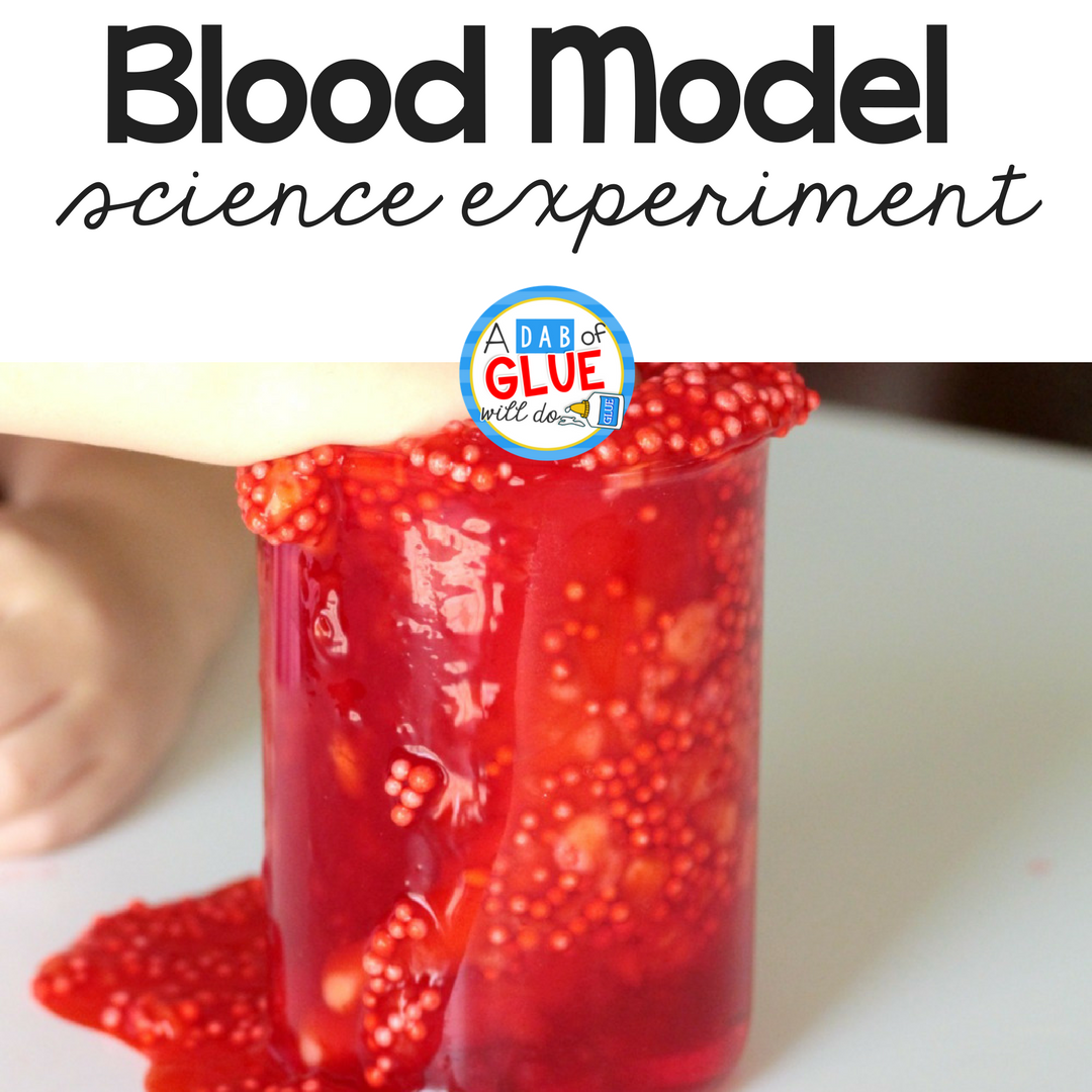 Blood Cell Model Science Activity