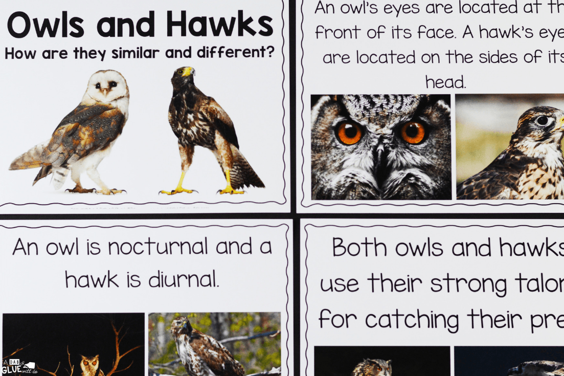 This Owls: An Animal Study is the perfect way for our students to learn and research about our feathered friends in an enjoyable hands-on way!