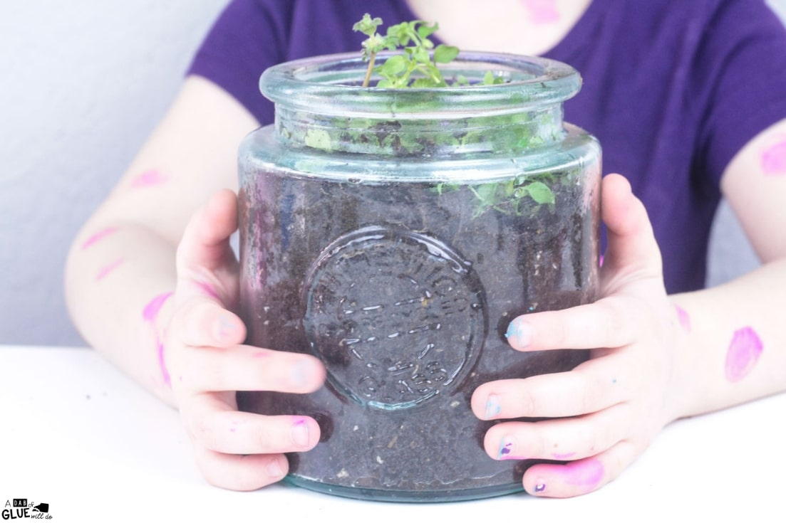 mini garden in a jar science experiment