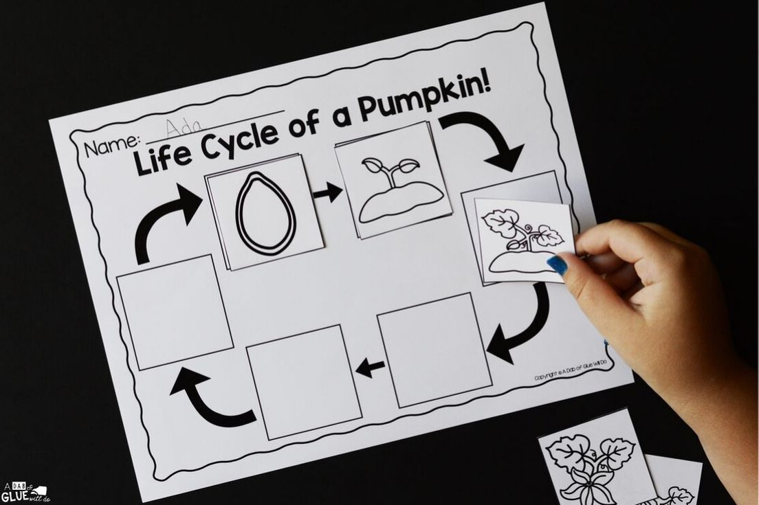to bring our fascination with pumpkins and science together, I've created this Pumpkins Science Unit.It's an excellent hands-on science unit.